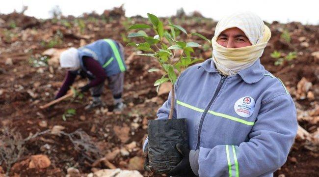 Denizli'ye tıbbi aromatik bitki bahçesi kuruluyor