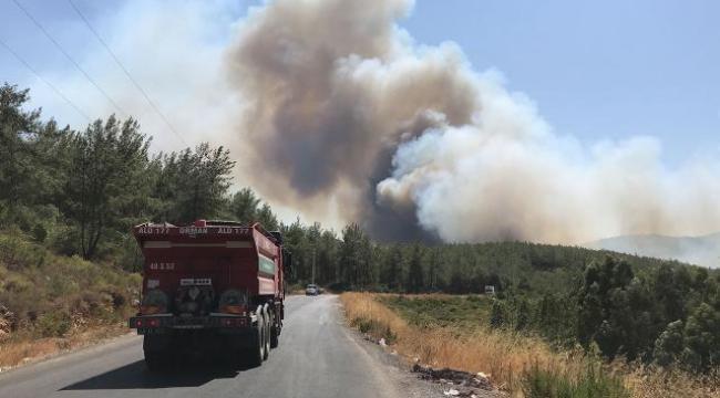 Bodrum ve Didim'de yangın